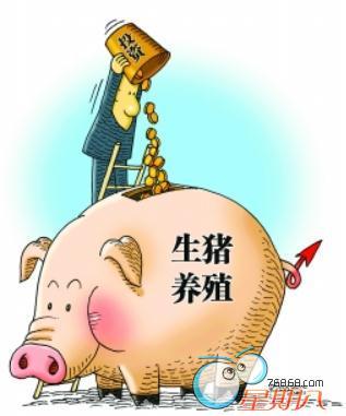 卖猪16式:掌握这些窍门能让自己的猪卖个好价钱