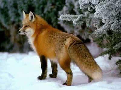 狐貉貂系列饲料